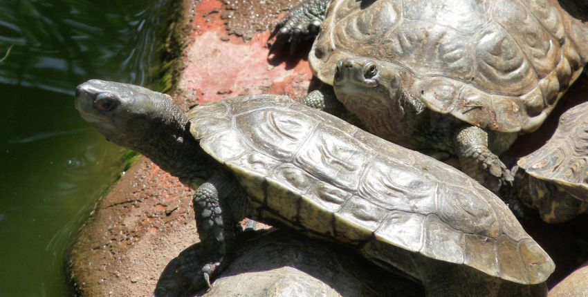 Village des Tortues de Carnoules